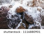 close up details of tropical... | Shutterstock . vector #1116880901