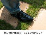 bridegroom walking to his... | Shutterstock . vector #1116904727