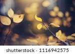 autumn background with yellow... | Shutterstock . vector #1116942575