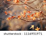 bright autumn background with... | Shutterstock . vector #1116951971