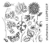 vector collection of hand drawn ... | Shutterstock .eps vector #1116991619