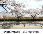 spring cherry blossom | Shutterstock . vector #1117091981