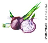 watercolor drawing of onions... | Shutterstock . vector #1117118261