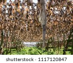 outdoor drying heads and... | Shutterstock . vector #1117120847
