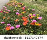 beautiful vibrant colorful... | Shutterstock . vector #1117147679