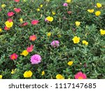 beautiful vibrant colorful... | Shutterstock . vector #1117147685