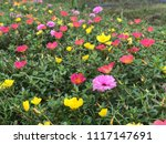 beautiful vibrant colorful... | Shutterstock . vector #1117147691