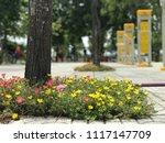 beautiful vibrant colorful... | Shutterstock . vector #1117147709