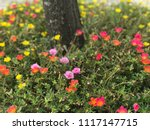 beautiful vibrant colorful... | Shutterstock . vector #1117147715