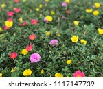 beautiful vibrant colorful... | Shutterstock . vector #1117147739