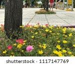 beautiful vibrant colorful... | Shutterstock . vector #1117147769