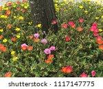 beautiful vibrant colorful... | Shutterstock . vector #1117147775