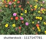 beautiful vibrant colorful... | Shutterstock . vector #1117147781