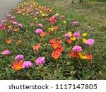 beautiful vibrant colorful... | Shutterstock . vector #1117147805