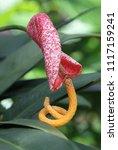 flowers in the botanical... | Shutterstock . vector #1117159241