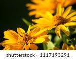 bouquet of bright yellow... | Shutterstock . vector #1117193291