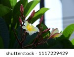 colorful flowers.group of... | Shutterstock . vector #1117229429