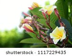 colorful flowers.group of... | Shutterstock . vector #1117229435
