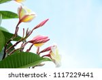 colorful flowers.group of... | Shutterstock . vector #1117229441