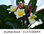 colorful flowers.group of... | Shutterstock . vector #1117230695