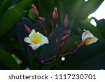 colorful flowers.group of... | Shutterstock . vector #1117230701