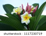 colorful flowers.group of... | Shutterstock . vector #1117230719