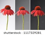 echinacea flowers as collage | Shutterstock . vector #1117329281