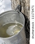 Collection Maple Tree Sap For...