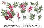 watercolor.  botanical... | Shutterstock . vector #1117353971