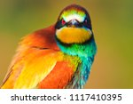 angry color bird watching ... | Shutterstock . vector #1117410395