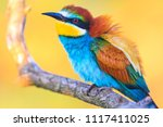incredibly beautiful birds at... | Shutterstock . vector #1117411025