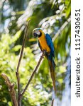 Macaw Parrot On The Tree