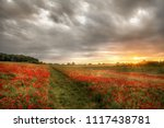 path through wild poppies at... | Shutterstock . vector #1117438781