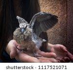 holding a bird in hand | Shutterstock . vector #1117521071