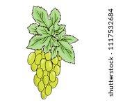 vector contour color green... | Shutterstock .eps vector #1117532684