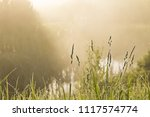 Golden Mist On The Grass Early...
