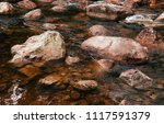 close up details of tropical... | Shutterstock . vector #1117591379