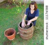 transplanting a tree | Shutterstock . vector #11176588