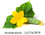 Green Cucumber With Flower And...