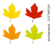 Set Of Colored Sycamore Leaves  ...