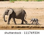 Stock photo elephant mother with calf samburu kenya 111769334