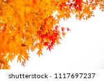 maple leaves orange and red in... | Shutterstock . vector #1117697237