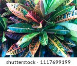 tropical colorful leaves in the ... | Shutterstock . vector #1117699199