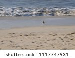 surf on the north sea coast off ... | Shutterstock . vector #1117747931