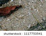 sand of art | Shutterstock . vector #1117753541