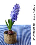 A beautiful blue hyacinth in a basket on a blue checkered table cloth - stock photo