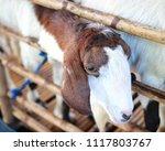 close up portrait of goat  | Shutterstock . vector #1117803767