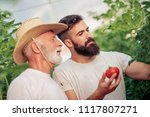 father and son check harvest of ... | Shutterstock . vector #1117807271