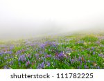 Wild flowers blooming in the mountains fog.  Mt. Rainier national Park area. Naches Peak Loop Trail. Roundtrip 3.0 miles, Elevation Gain 600 ft Highest Point5849 ft - stock photo