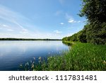 green coast  forest on the... | Shutterstock . vector #1117831481